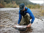A Wild Klickitat River Steelhead-October 2005